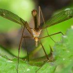 pulseira anti-mosquitos